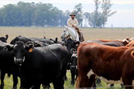 cattle emissions